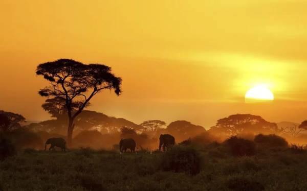 Кения виза