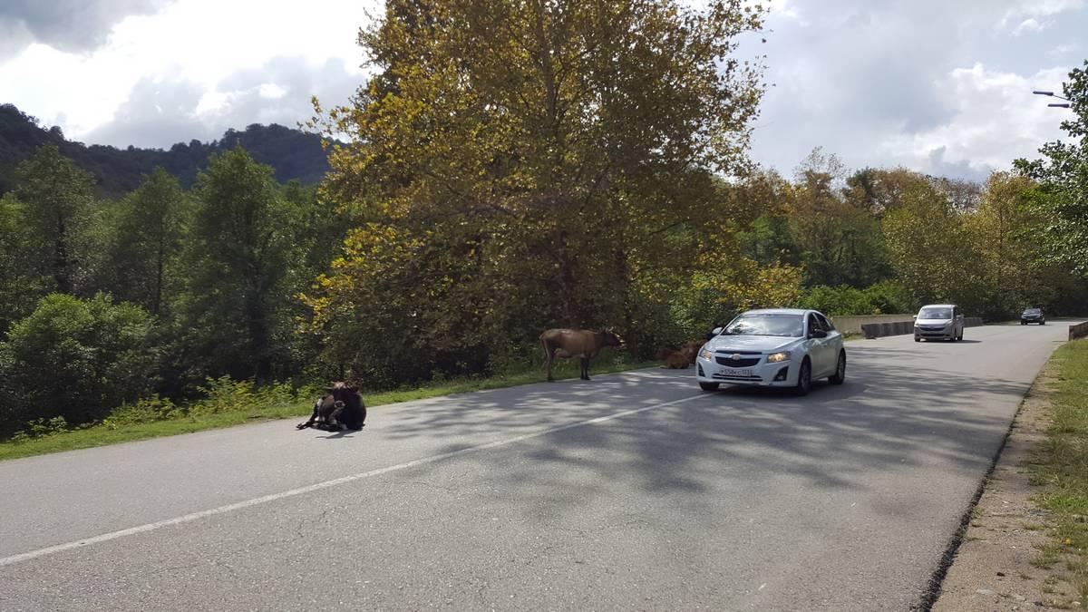 Как пересечь границу с абхазией на автомобиле